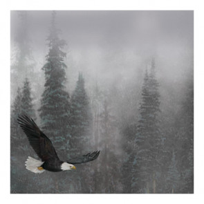 "Sugar Tree Papers 12x12"" - Gliding Eagle"